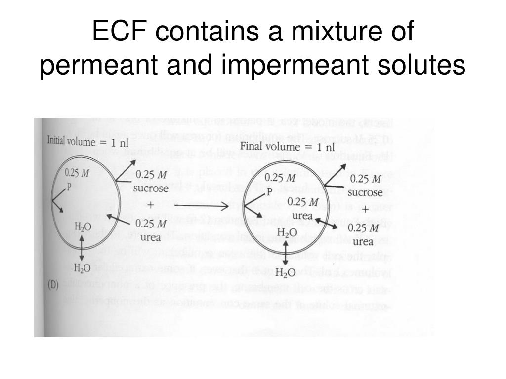 ECF contains a mixture of permeant and impermeant solutes