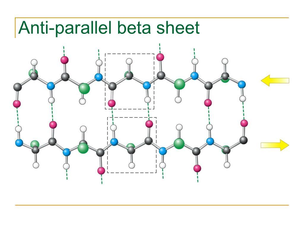 Anti-parallel beta sheet