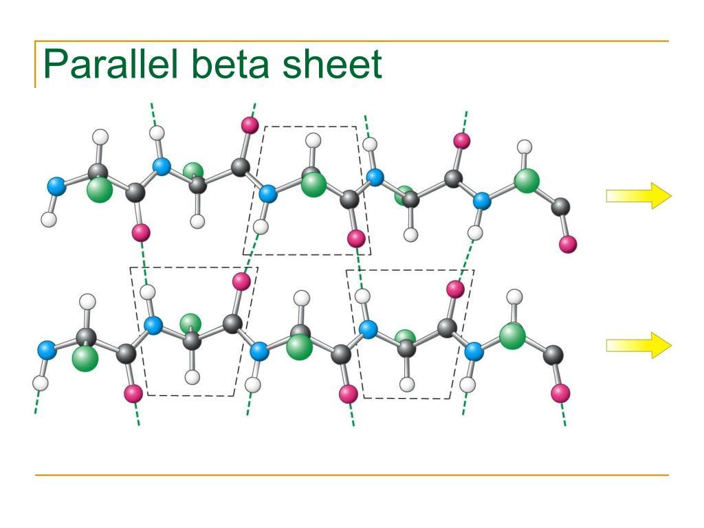 Parallel beta sheet