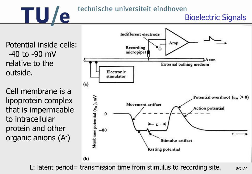 Bioelectric Signals