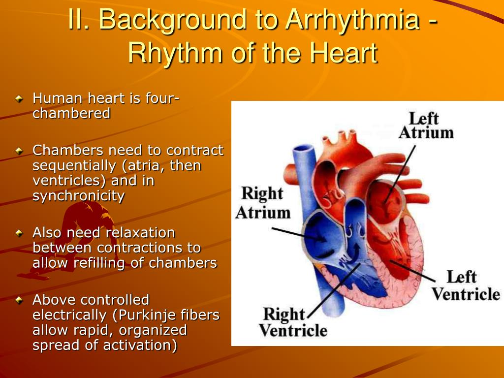 II. Background to Arrhythmia - Rhythm of the Heart