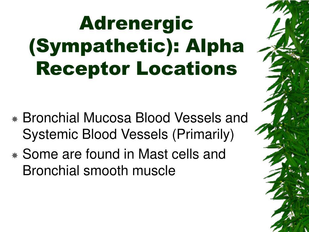Adrenergic (Sympathetic): Alpha Receptor Locations