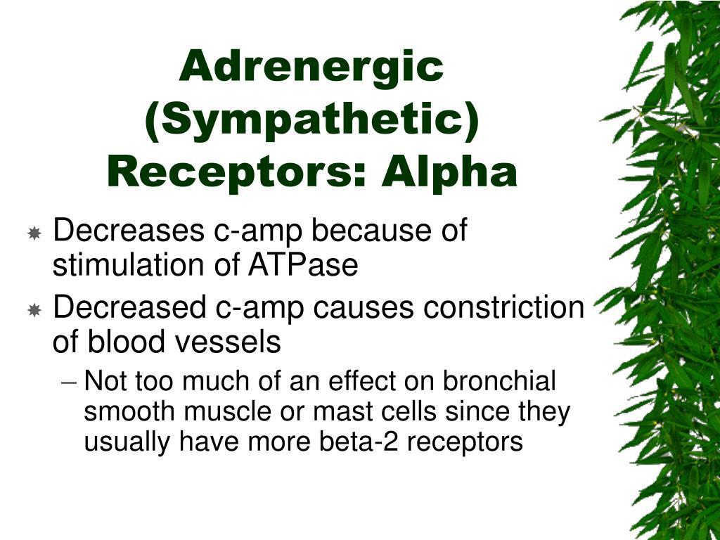 Adrenergic (Sympathetic) Receptors: Alpha