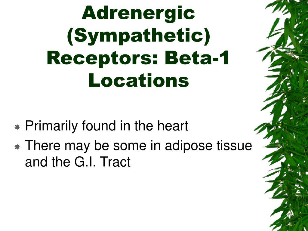 Adrenergic (Sympathetic) Receptors: Beta-1 Locations