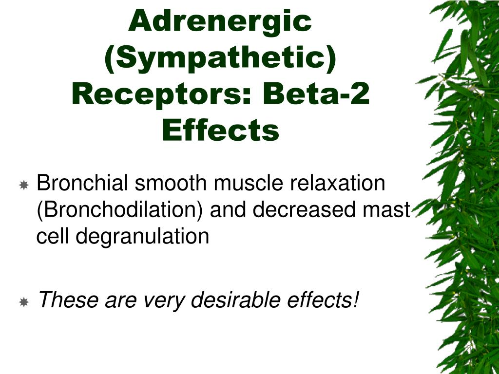 Adrenergic (Sympathetic) Receptors: Beta-2 Effects