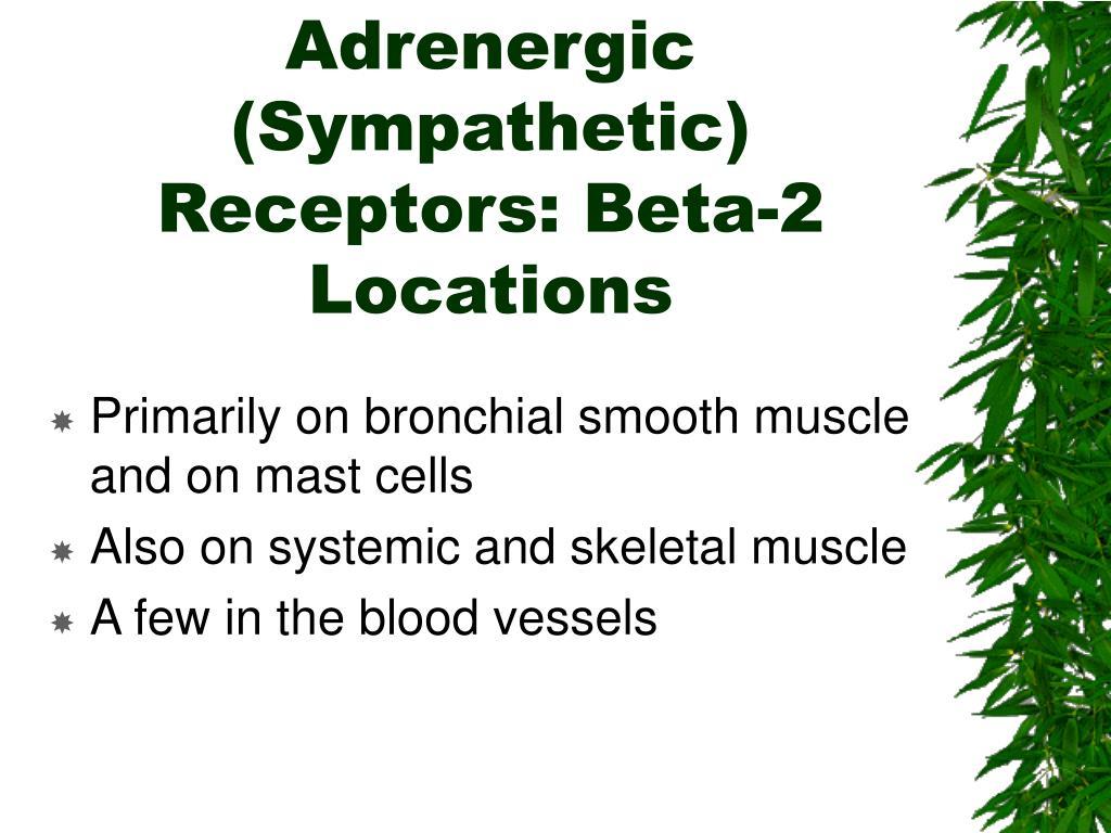 Adrenergic (Sympathetic) Receptors: Beta-2 Locations