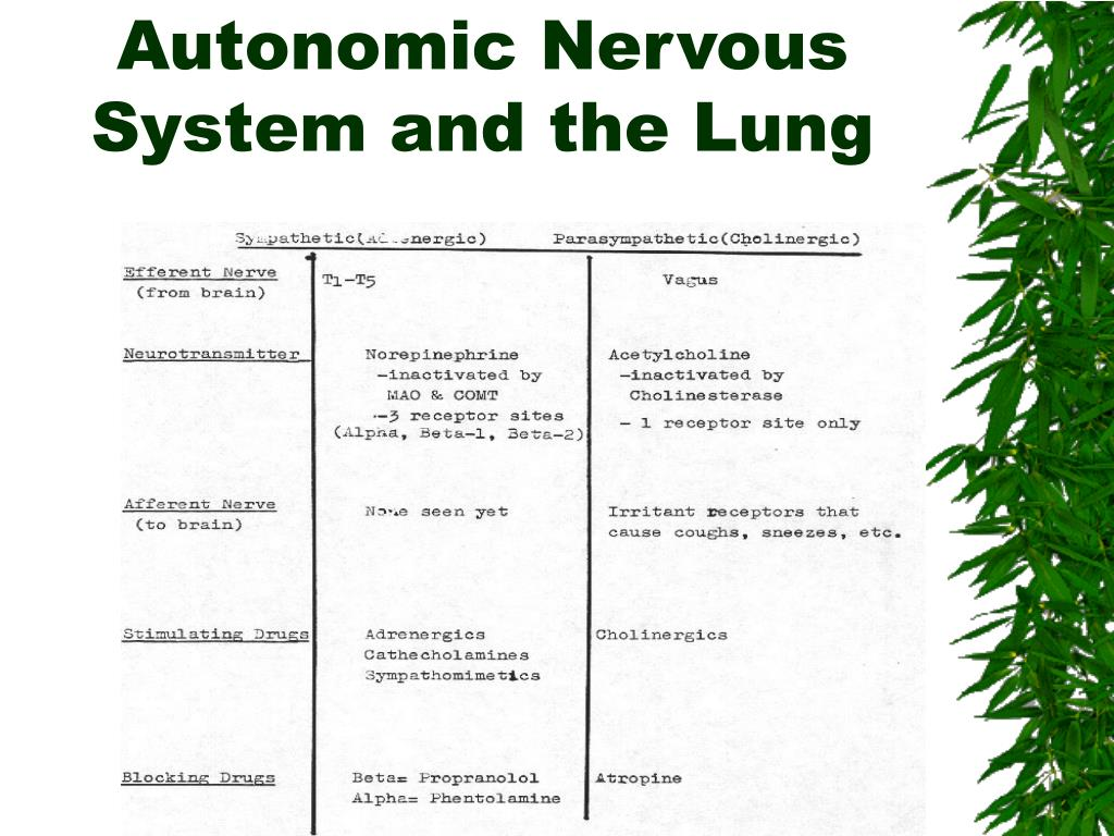 Autonomic Nervous System and the Lung