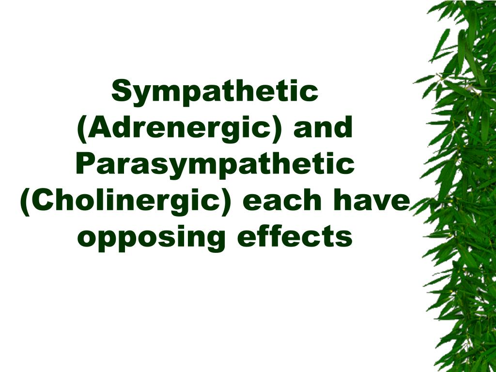Sympathetic (Adrenergic) and Parasympathetic (Cholinergic) each have opposing effects
