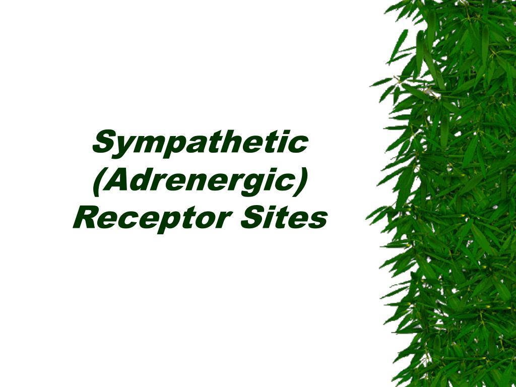 Sympathetic (Adrenergic) Receptor Sites