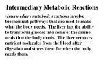 intermediary metabolic reactions