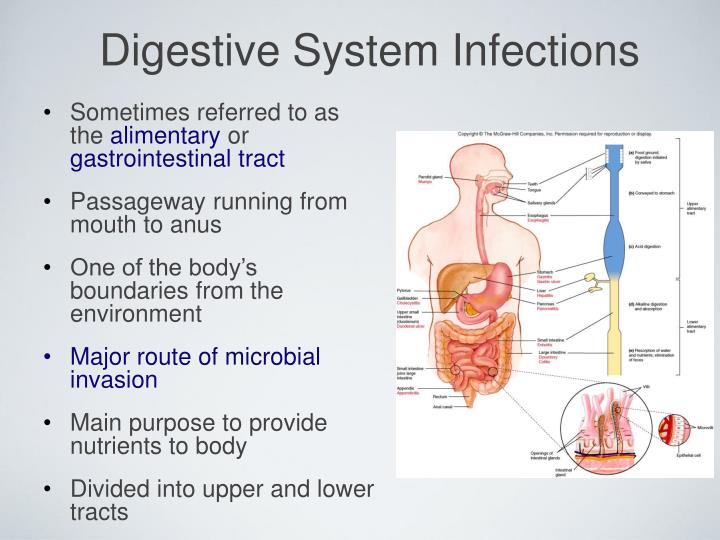 Digestive system infections2