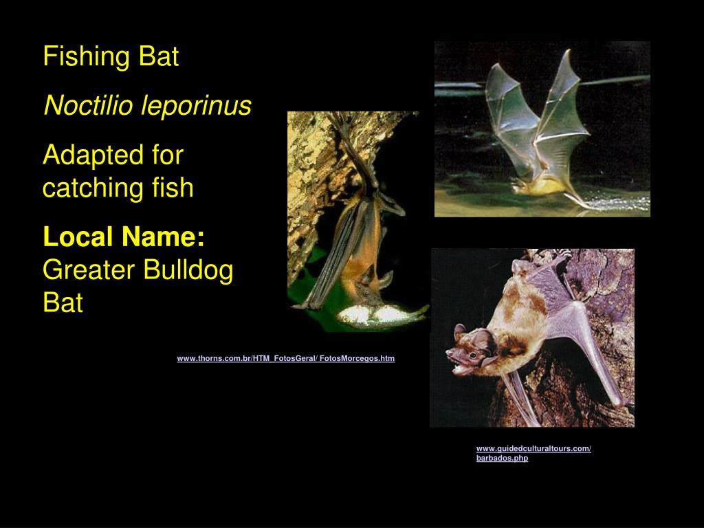 Fishing Bat