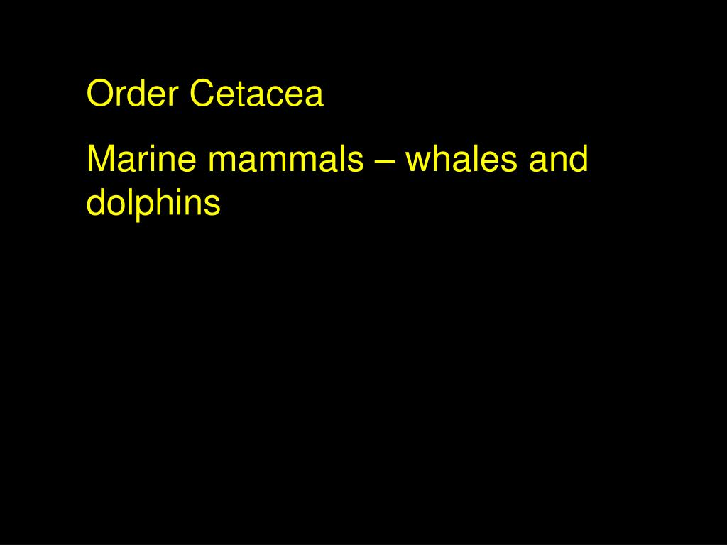 Order Cetacea