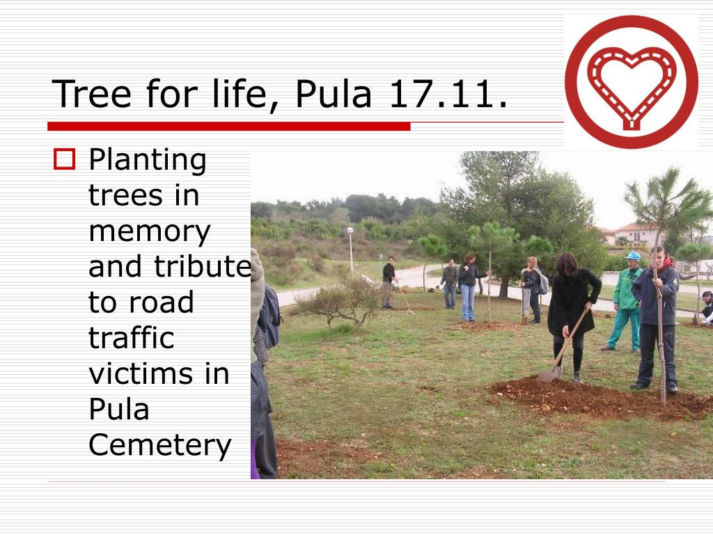 Tree for life, Pula 17.11.