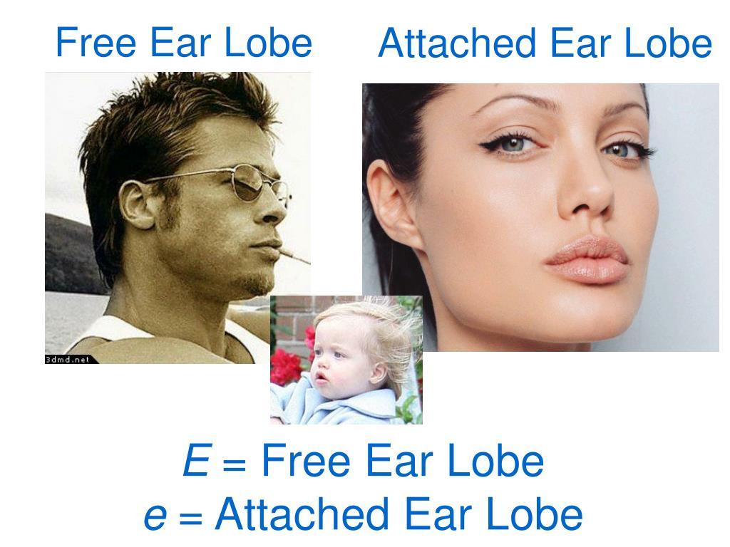 Attached Ear Lobe