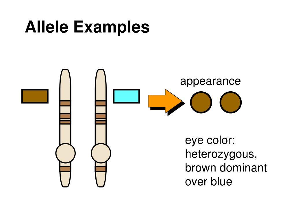 Allele Examples