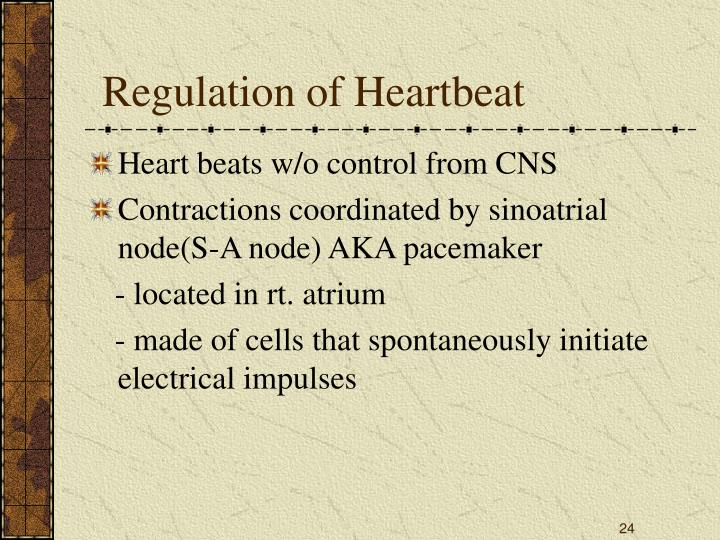 Regulation of Heartbeat