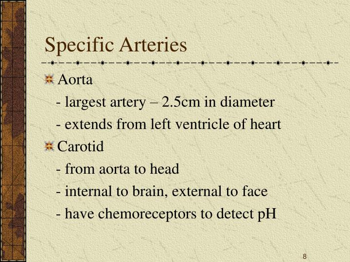 Specific Arteries