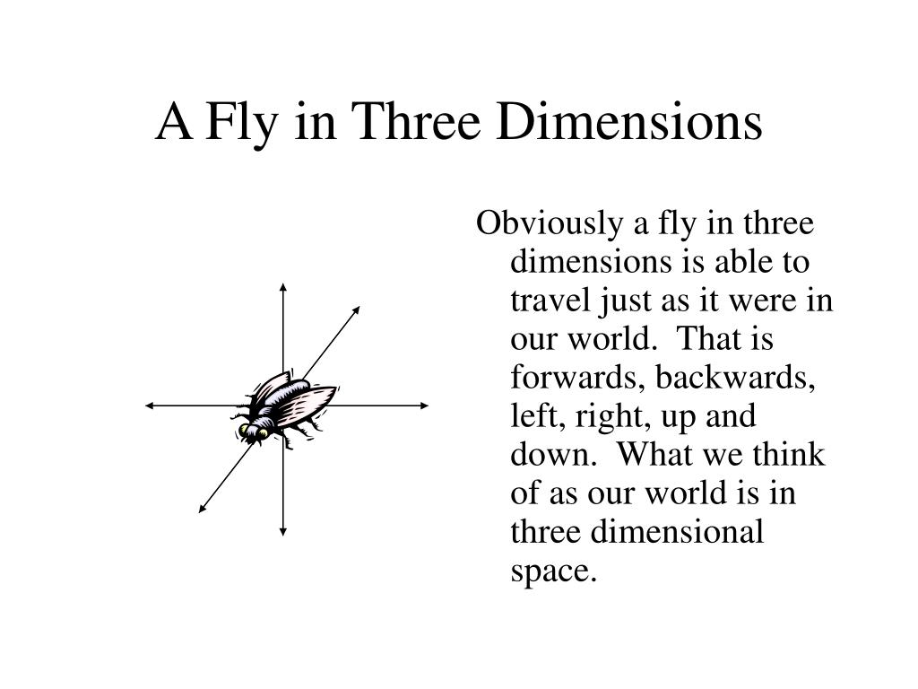 A Fly in Three Dimensions