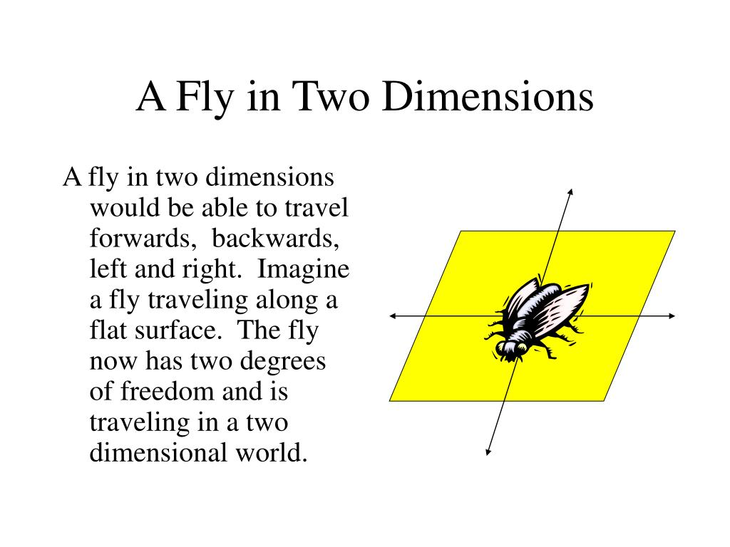 A Fly in Two Dimensions