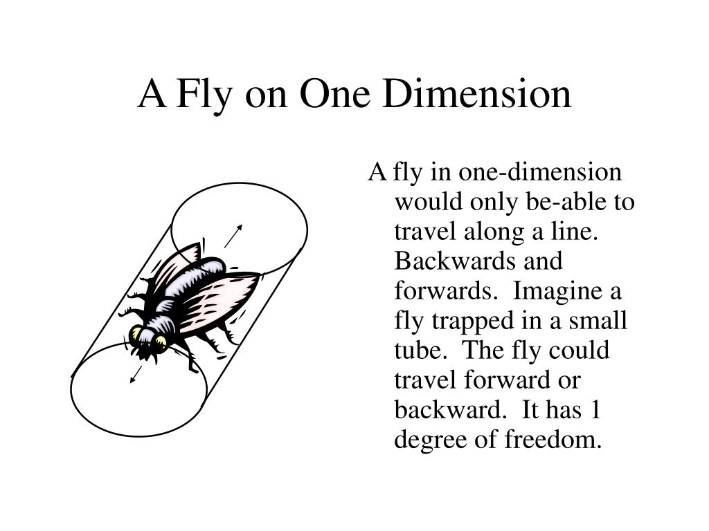 A Fly on One Dimension