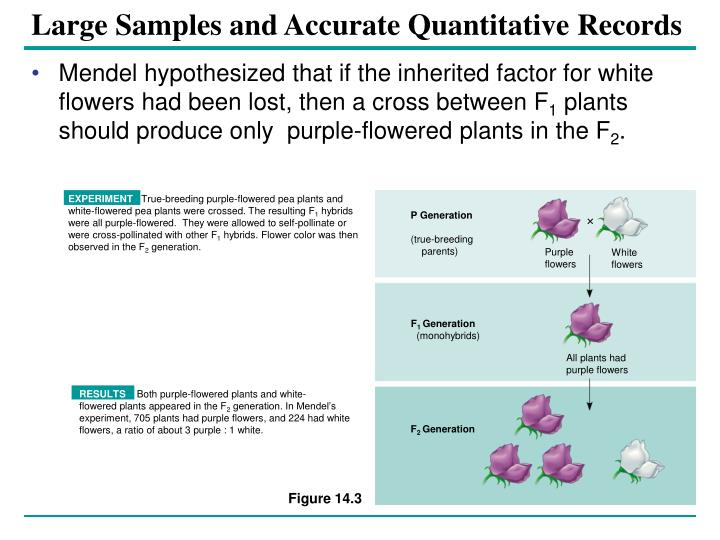 Large samples and accurate quantitative records