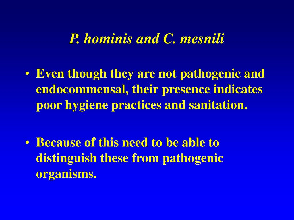 P. hominis and C. mesnili