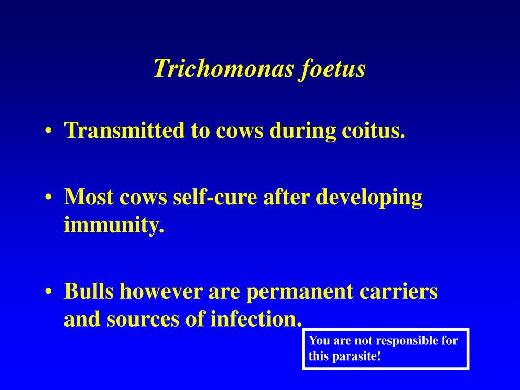 Trichomonas foetus