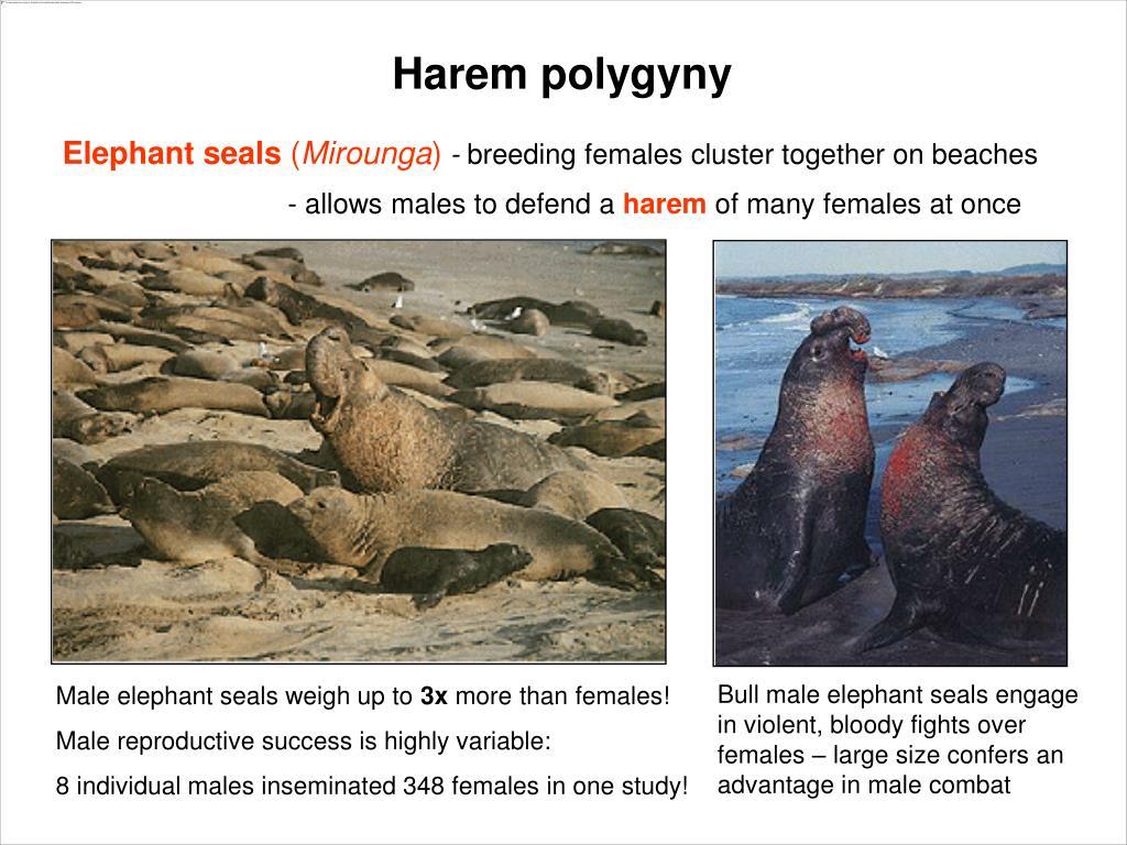 Harem polygyny