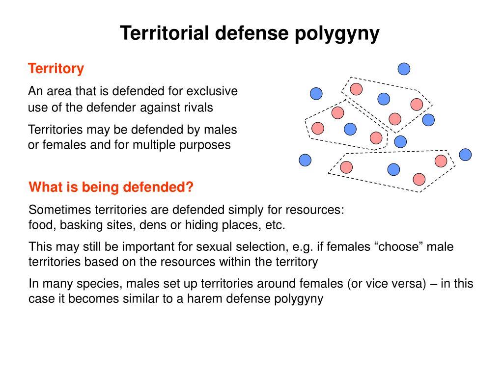 Territorial defense polygyny