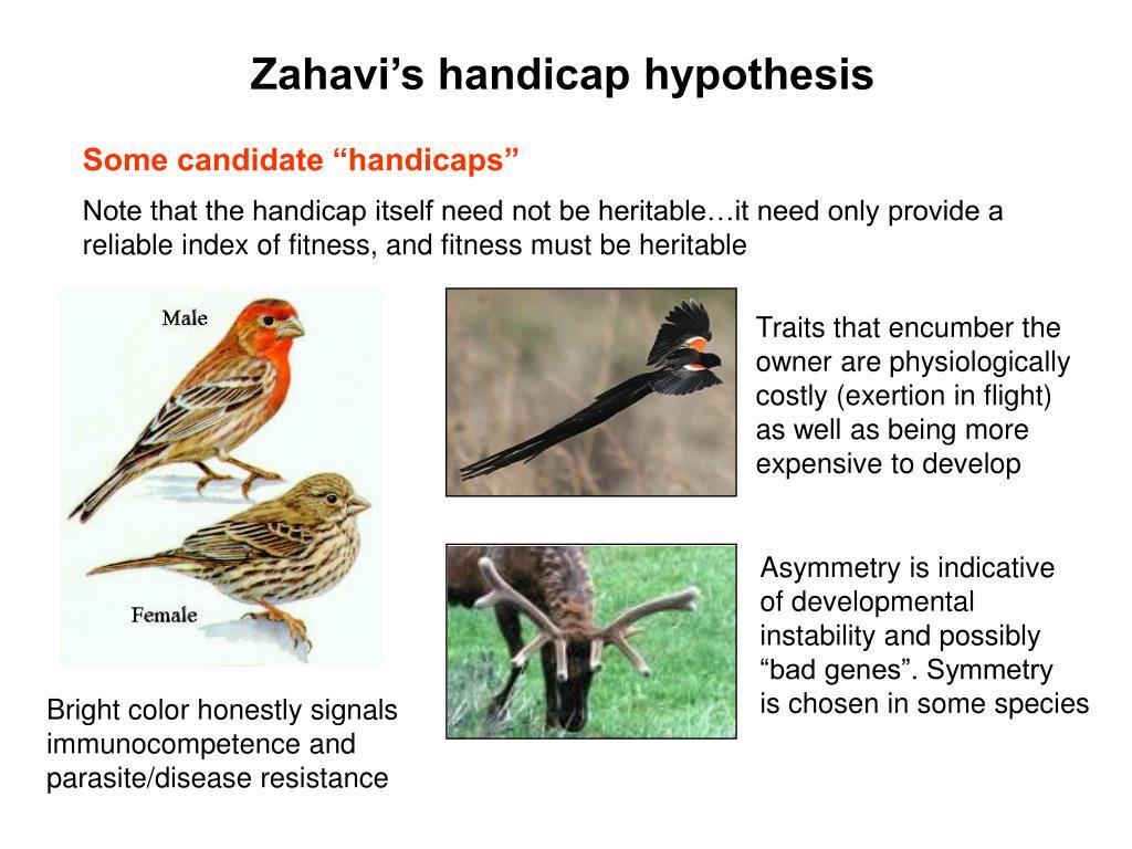 Zahavi's handicap hypothesis