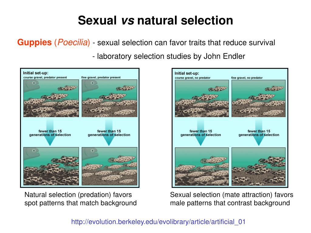 Natural selection (predation) favors