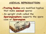 asexual reproduction29