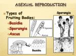 asexual reproduction30