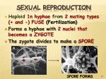 sexual reproduction25
