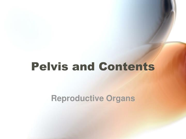 pelvis and contents n.