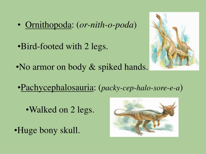 Bird-footed with 2 legs.
