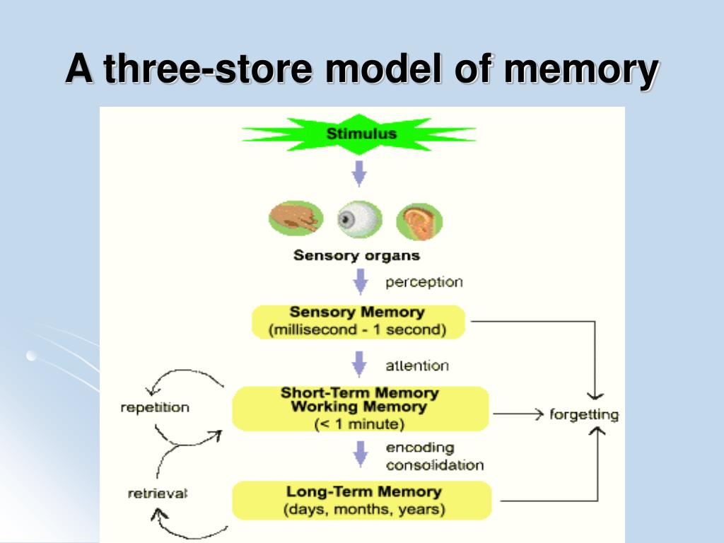 A three-store model of memory