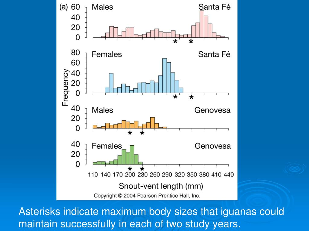 Asterisks indicate maximum body sizes that iguanas could