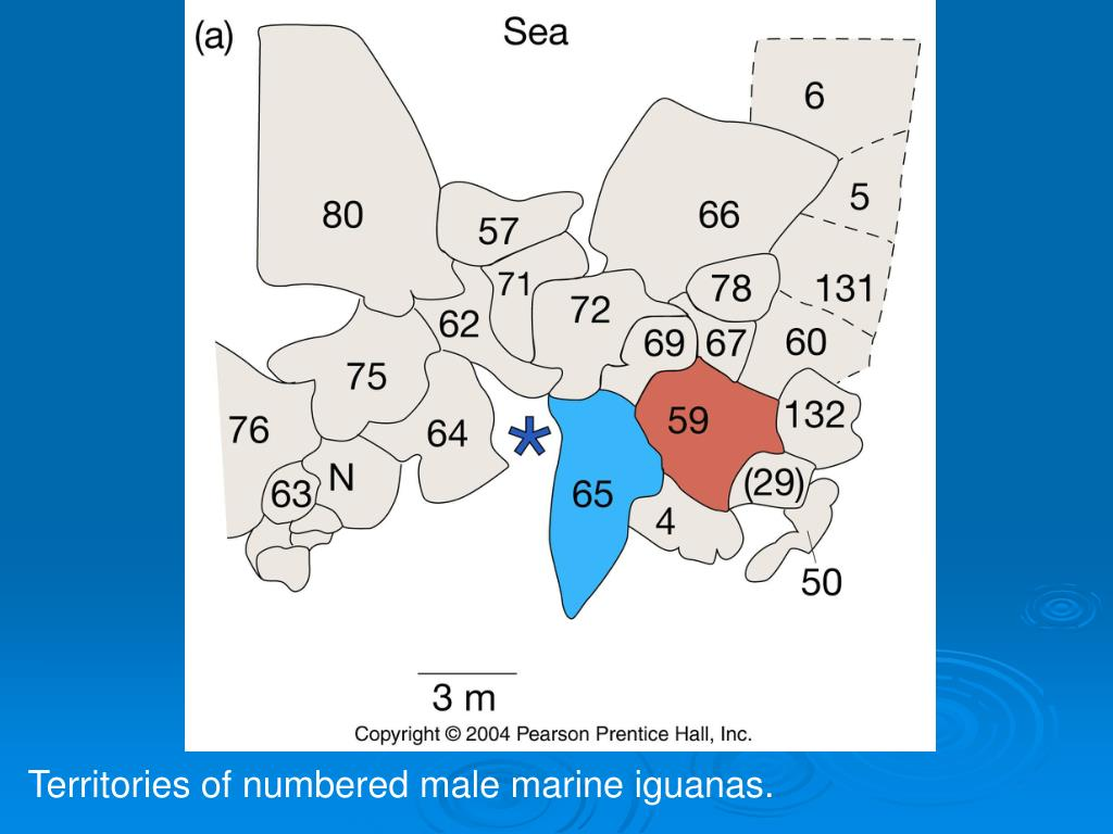 Territories of numbered male marine iguanas.