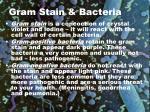 gram stain bacteria