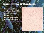 gram stain bacteria6