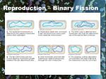 reproduction binary fission