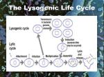 the lysogenic life cycle18