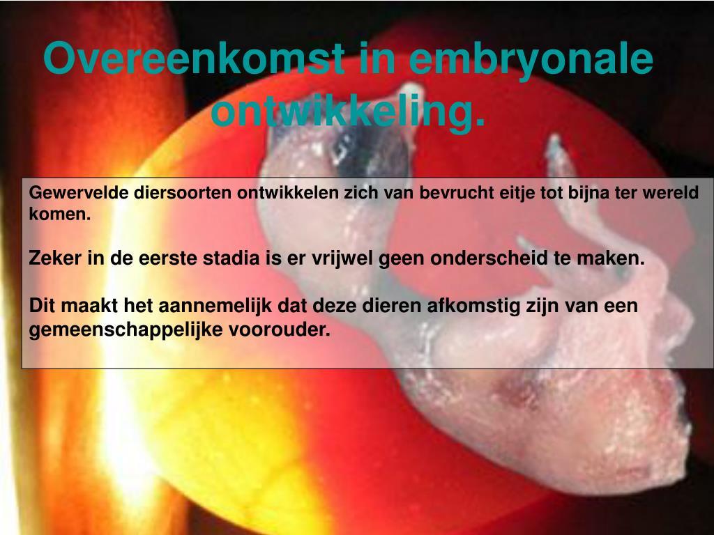 Overeenkomst in embryonale ontwikkeling.