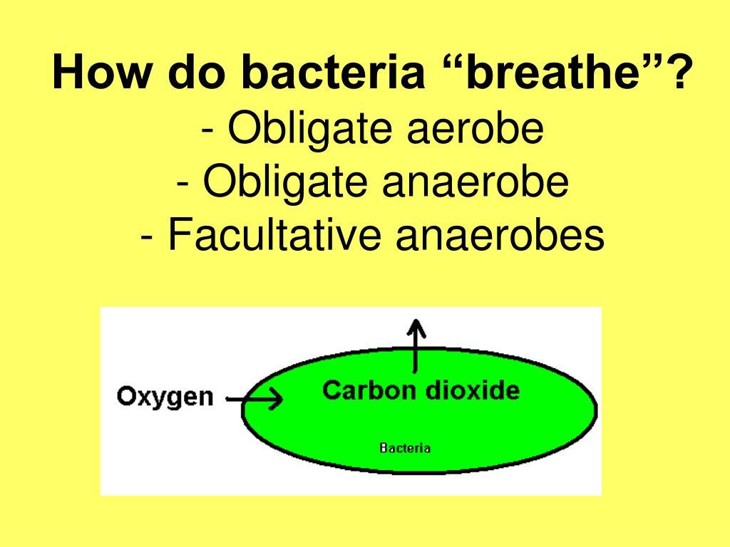 "How do bacteria ""breathe""?"