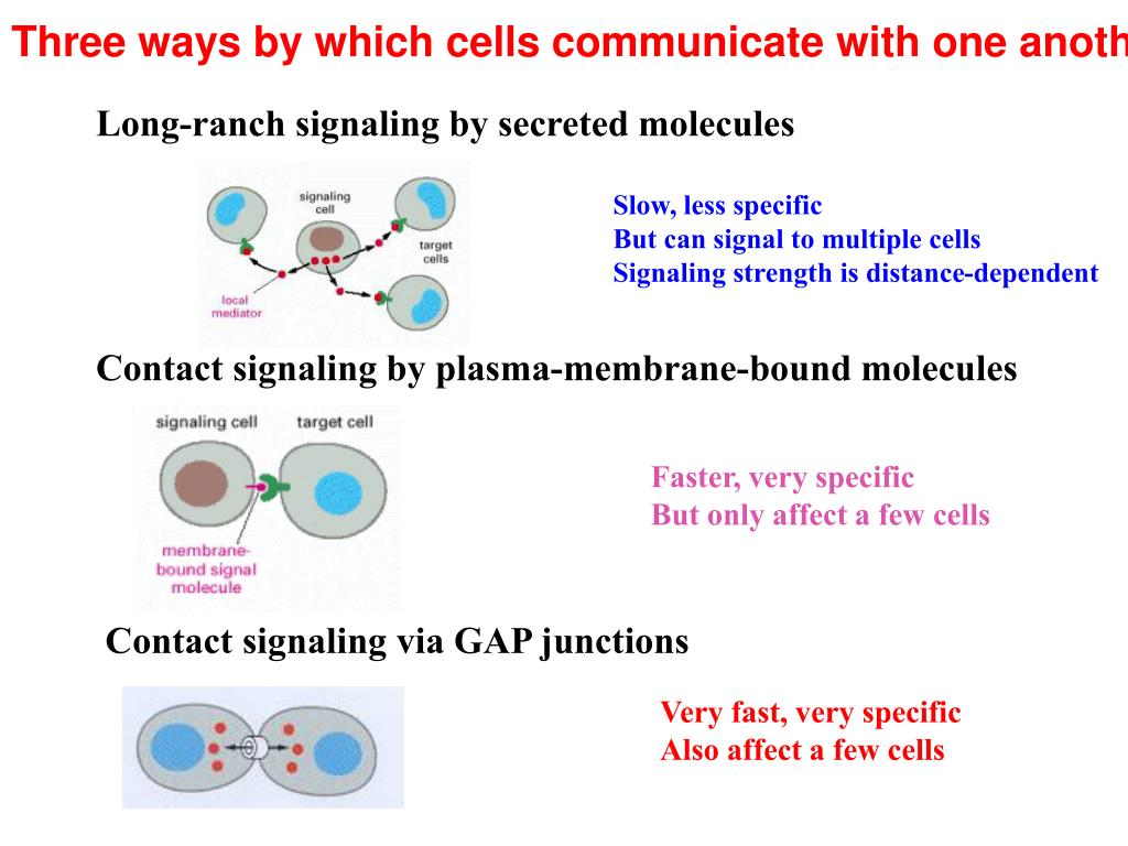 Three ways by which cells communicate with one another