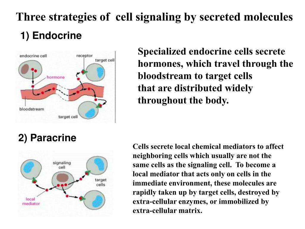 Three strategies of  cell signaling by secreted molecules