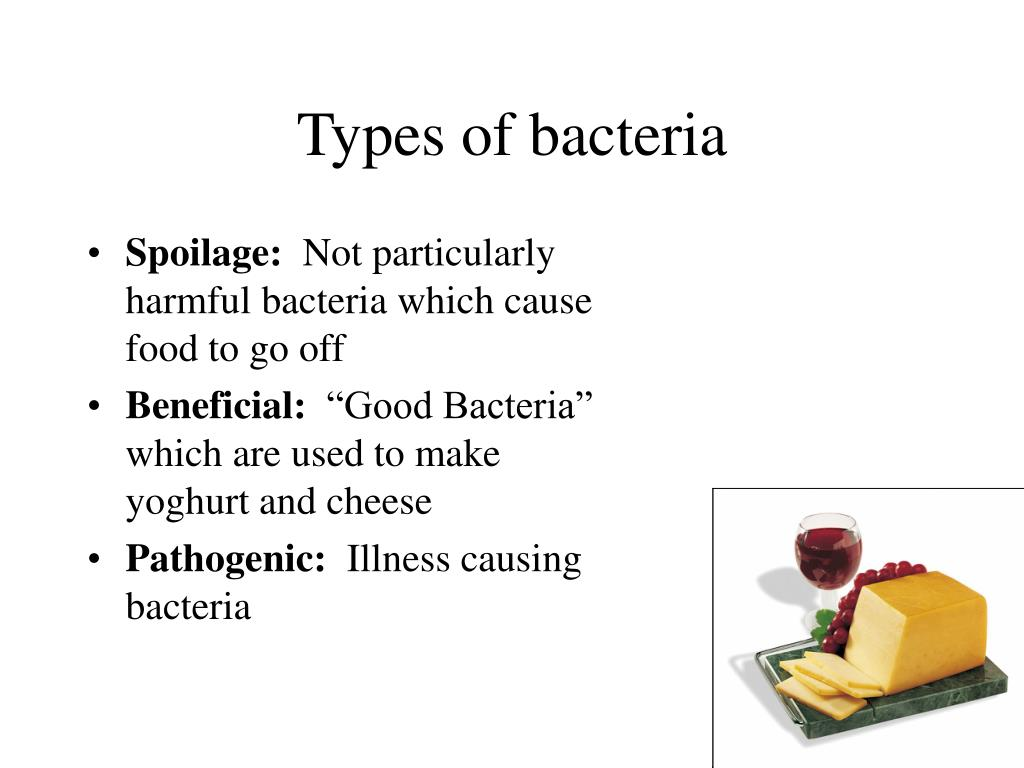 types of bacteria l.