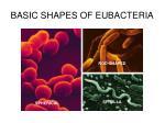 basic shapes of eubacteria